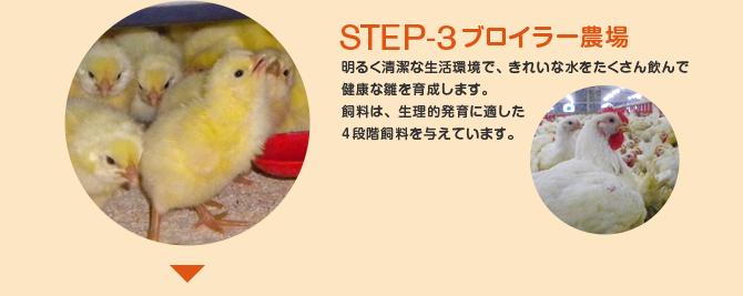 STEP-3 ブロイラー農場 明るく清潔な生活環境で、きれいな水をたくさん飲んで 健康な雛を育成します。 飼料は、生理的発育に適した 4段階飼料を与えていま
