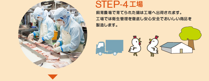STEP-4 工場 飼育農場で育てられた鶏は工場へ出荷されます。 工場では衛生管理を徹底し安心安全でおいしい商品を製造します。